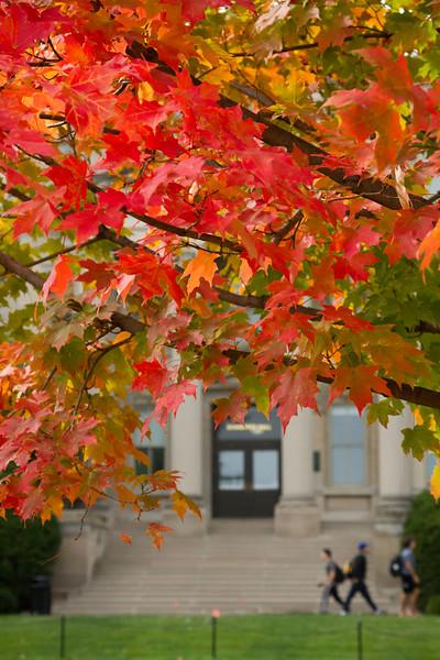 campus_fall_old cap_stu_2015_9809