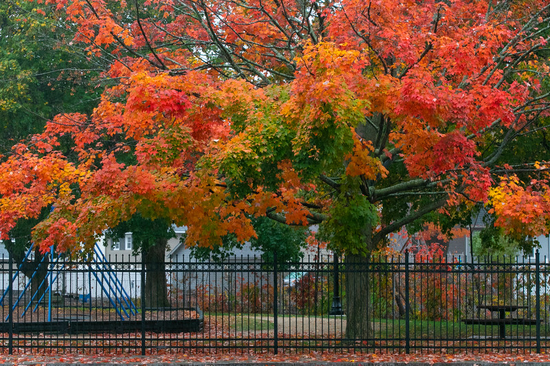 The trees in Doyle Field in Leominster have taken on the fall colors. SENTINEL & ENTERPRISE/JOHN LOVE