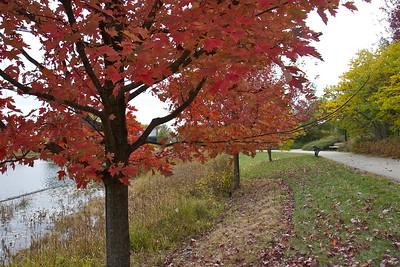 Fall foliage, The Morton Arboretum, Lisle, Ill., October 2015.