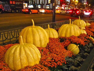 Pumpkin display on the Magnificent Mile, downtown Chicago, October 2015.
