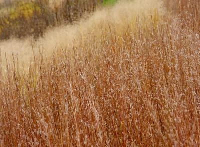 Beautiful browns, tans, creams at The Morton Arboretum, Lisle, Ill., October 2015.