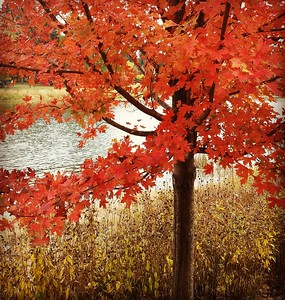 Fall in Chicagoland, October 2015