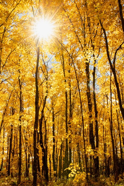Sunny Fall Day