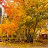 Fall in Truckee, California