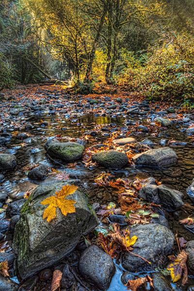 Oneonta Creek in Fall