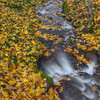 Epic! Epic Leaf Fall this Year at Starvation Creek.