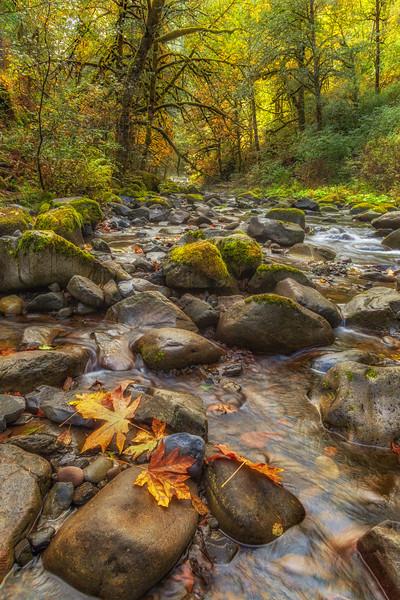 More Fall Colors at Tanner Creek Columbia River Gorge Oregon