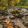 More Fall Colors at Tanner Creek Columbia River Gorge Oregon