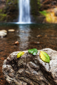 A little Bokkeh at Horsetail Falls. Columbia River Gorge Oregon