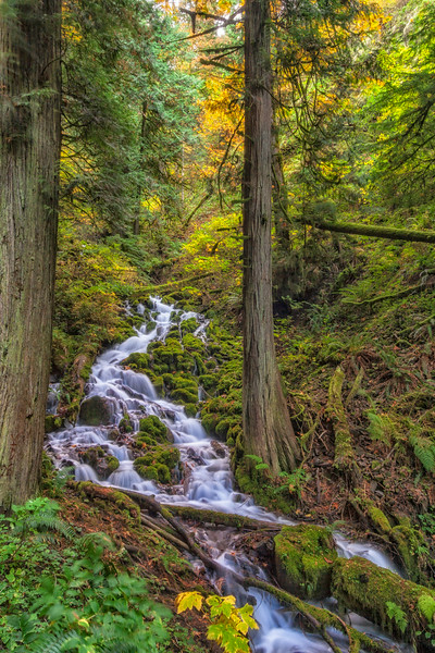 The Coming Fall Along Wahkeena Creek Columbia River Gorge Oregon