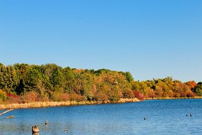 Fall in the City. Fall colors on the shore of a lake
