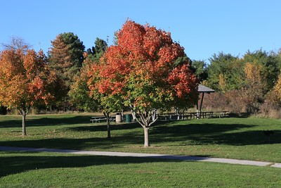 Fall in the City. Autumn foliage colors in a park with trails.
