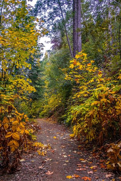 Fall in the Big Carson