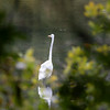 This great egret was hunting for food at Barrett Park in Leominster on Tuesday morning. SENTINEL & ENTERPRISE/JOHN LOVE