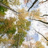 The leaves on the trees at Barrett Park in Leominster are starting to change color. SENTINEL & ENTERPRISE/JOHN LOVE