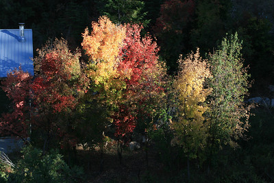fall colors Sept  15  2012