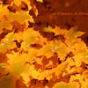 Fall Leaves<br /> © Pamela Stover<br /> Exposed Images Photography