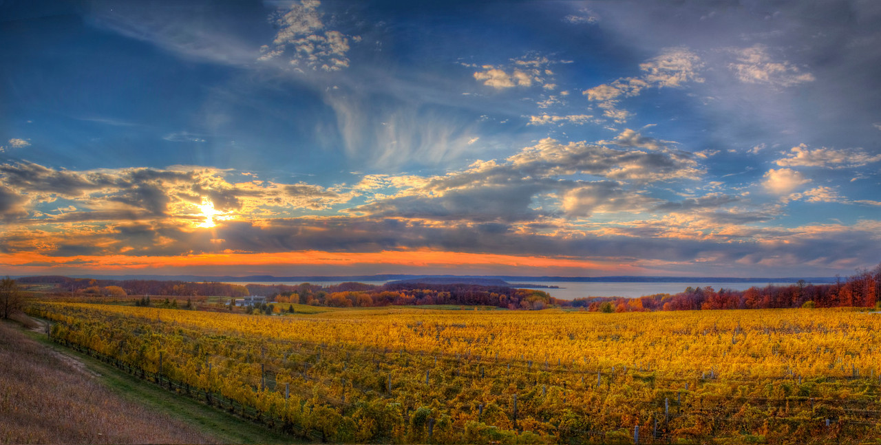 Old Mission Peninsula Vineyard in Fall