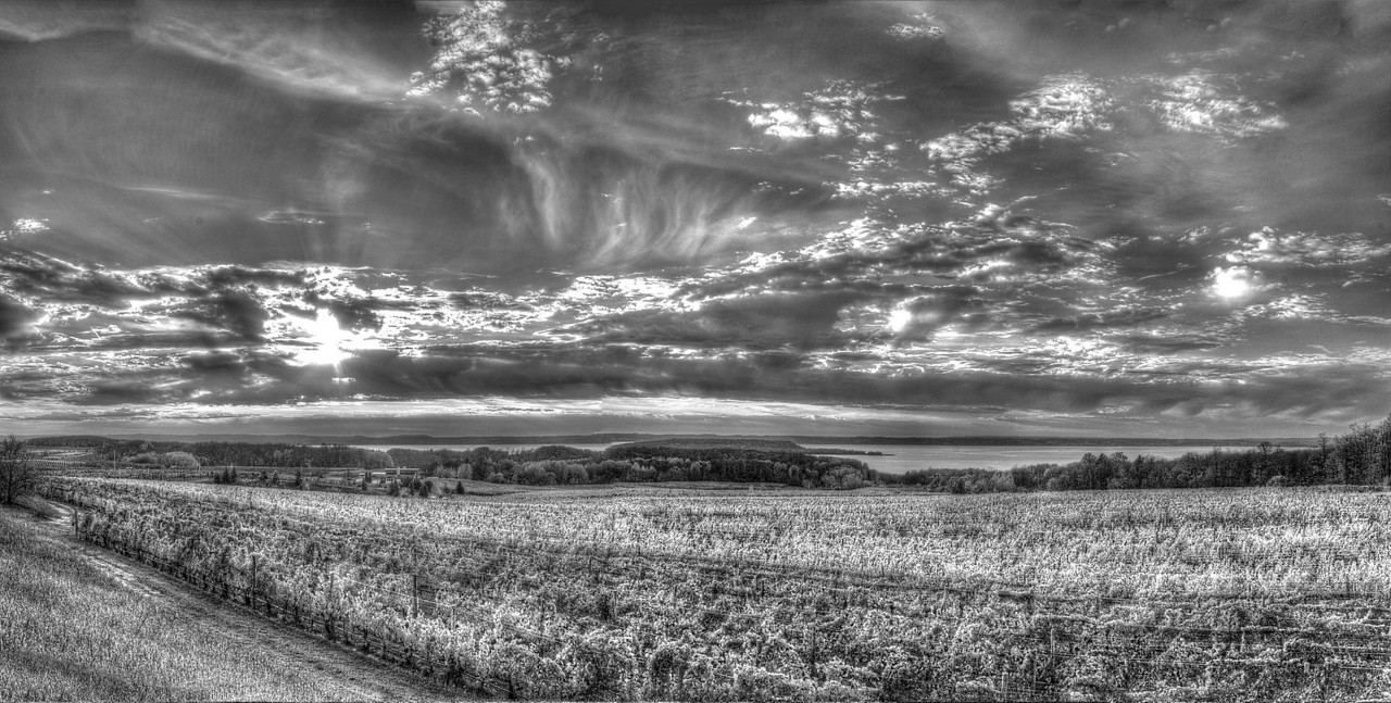 Old Mission Peninsula Vineyard (B & W)