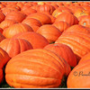 Pumpkins<br /> © Pamela Stover<br /> Exposed Images Photography