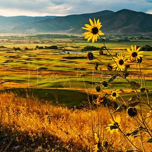 Heber Valley Sunflowers