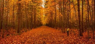 Ottawa Greenbelt Walkway During a Fall Sunrise
