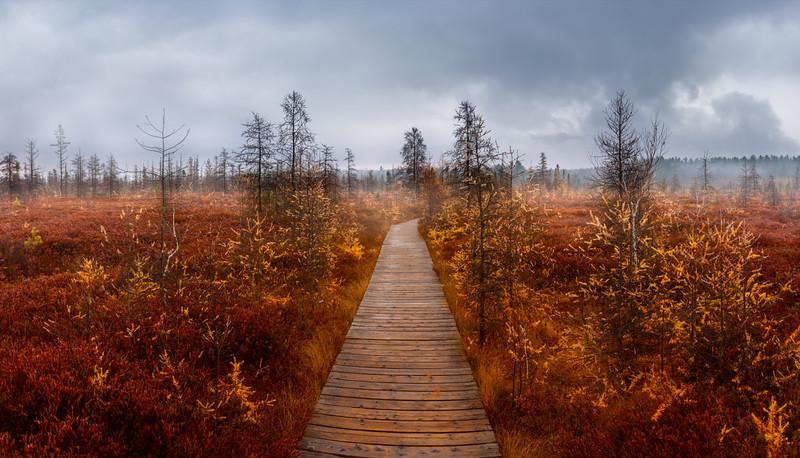 Foggy Fall Boardwalk - Mer Bleue