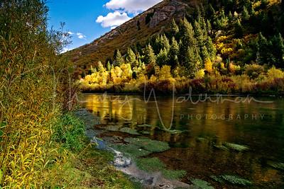 Provo River Spotlight
