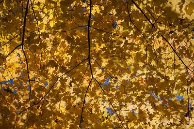 """yellow canopy"""