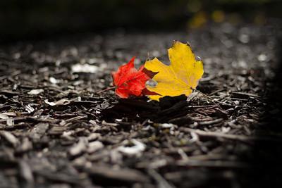"fall's embrace"""