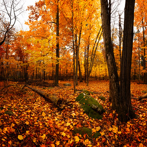 Jack Pine Trail Fall Colors