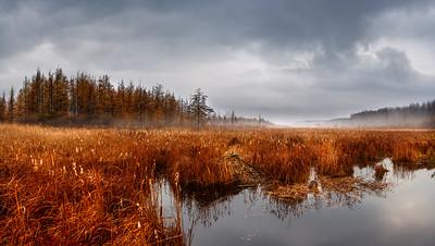 Busy Beavers on a Foggy Fall Morning