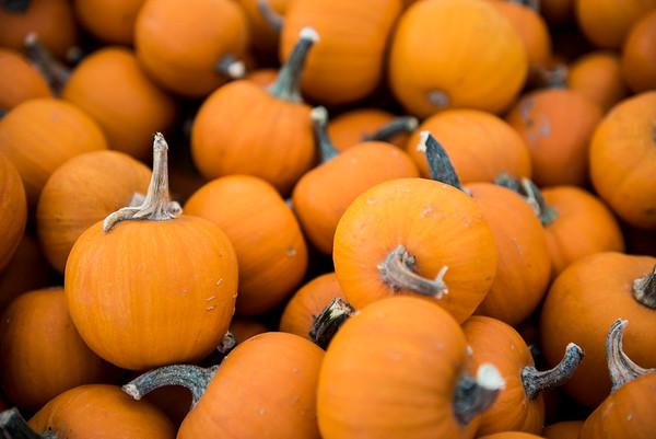 We Be Little Pumpkins