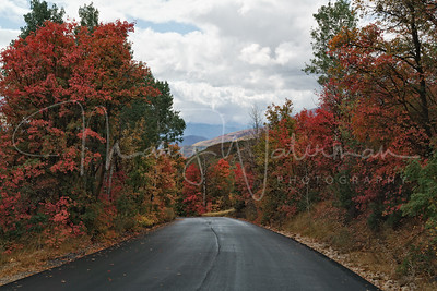 Maples on Guardsman Pass Road