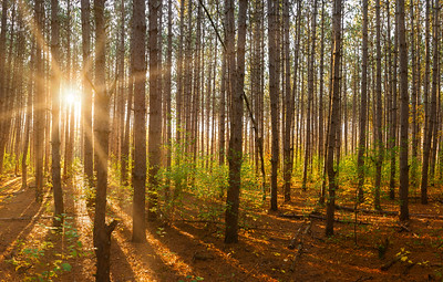 Fall Morning Sun Burst In The Forest