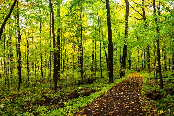 Fall Path 1