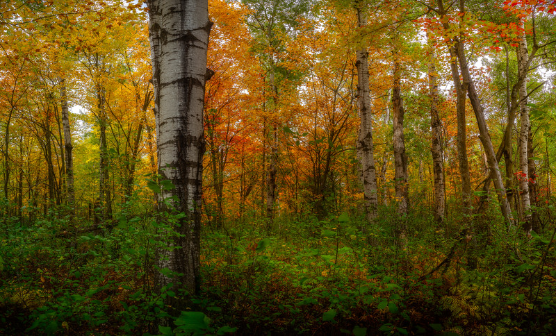 Wandering through the forest in Gatineau Park in Chelsea, Quebec.