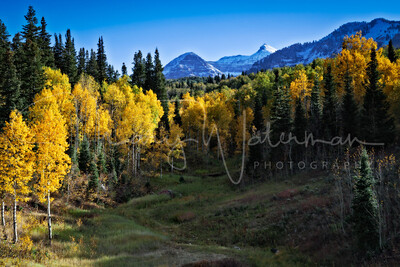 Aspens Beneath Mount Timpanogos