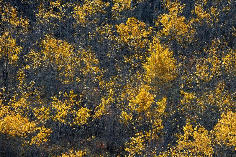 Uinta National Forest, UT 2021