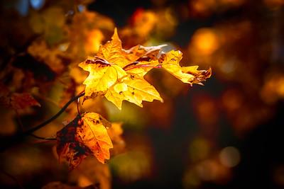 fall 2015 (157)-300