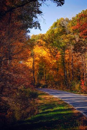 fall 2015 (124)-vert