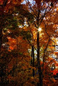 fall 2015 (108)-Edit-vert