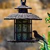 Second Bird Feeder