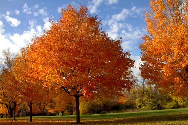 Autumn At Silver Lake