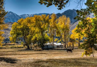 autumn-horse-pasture-1