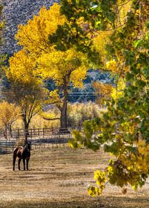 horse-fall-color-2