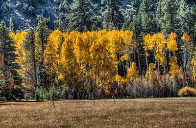 mountain-trees-meadow-1