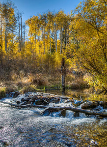 mountain-creek-leaves-1