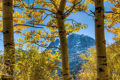 trees-leaves-mountain-1