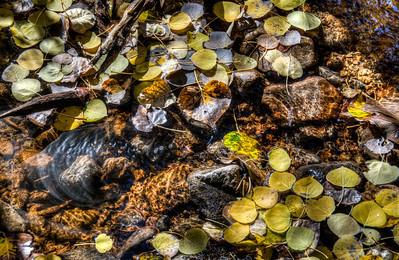 fall-leaves-creek-1